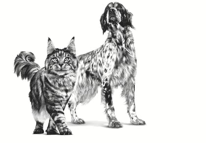VHN-PACKAGING EMBLEMATIC-ALL ADULT DOGS AND CATS-VHN TRANSVERSAL PACKAGING CHARTER