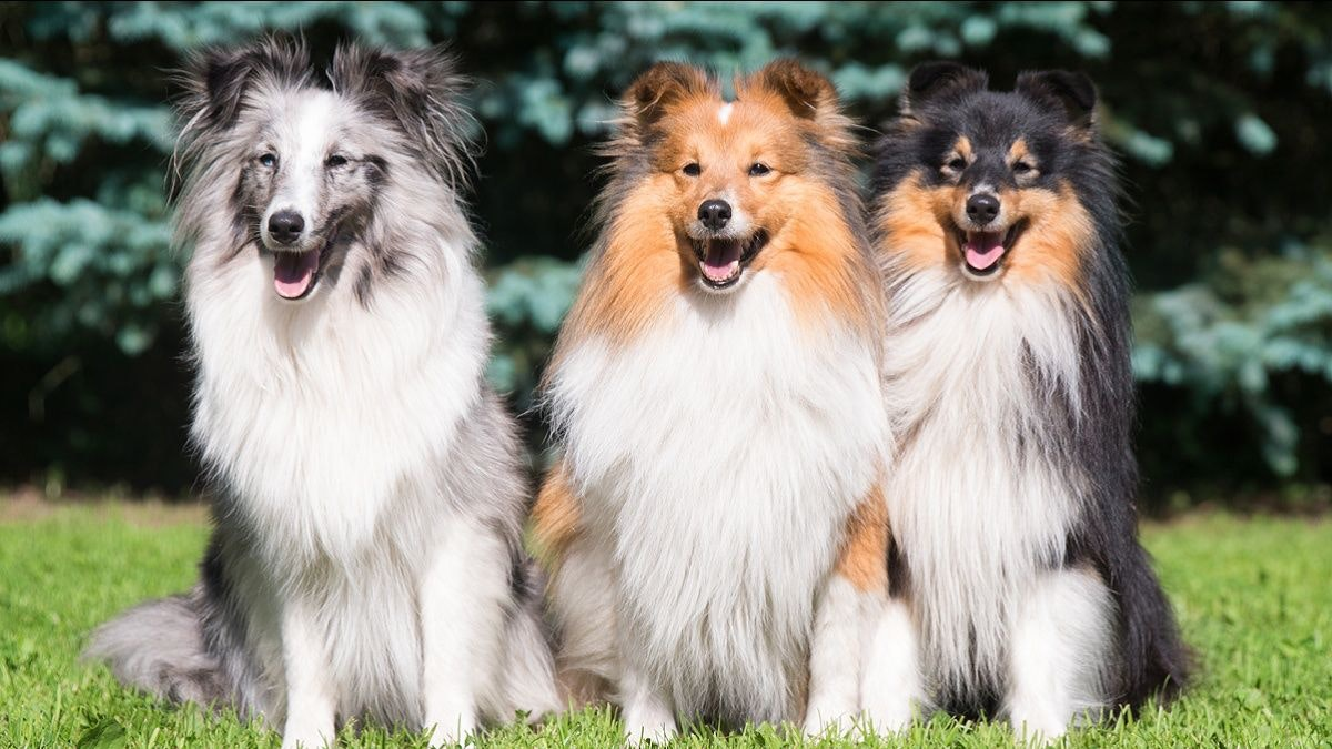 The small dog trend: impact of size on pet health