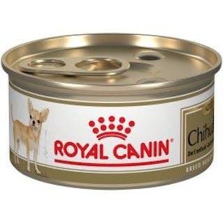 Chihuahua Adulto lata