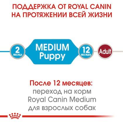 HI_SHN_WET_MEDIUM_PUPPY_ru_1