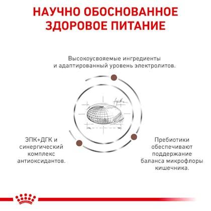 RC-VET-DRY-CatGastroHE-Eretailkit-B1_4-RU
