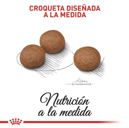 DIGESTIVE CARE MEDIUM COLOMBIA 3