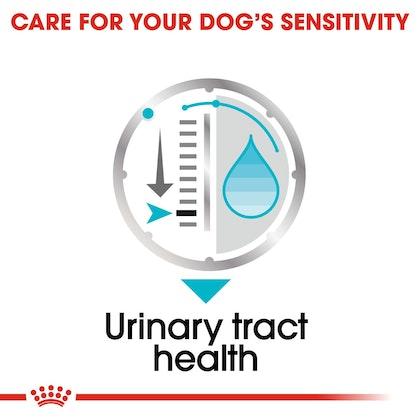 CCN-Wet-Urinary-CV-Eretailkit-3