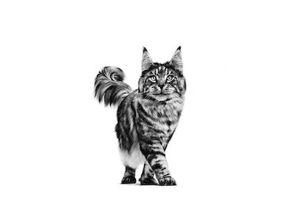 Cat Health Management
