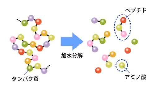 77_Japan_local_FAQ_Protein.jpg
