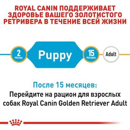 RC-BHN-PuppyGoldenRetriever_2-RU.jpg