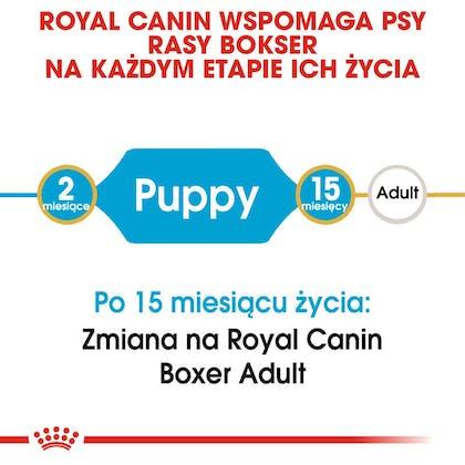 RC-BHN-PuppyBoxer-CM-EretailKit-1-pl_PL