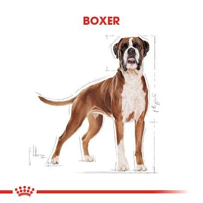 Royal Canin Boxer Adult Köpek Maması 1
