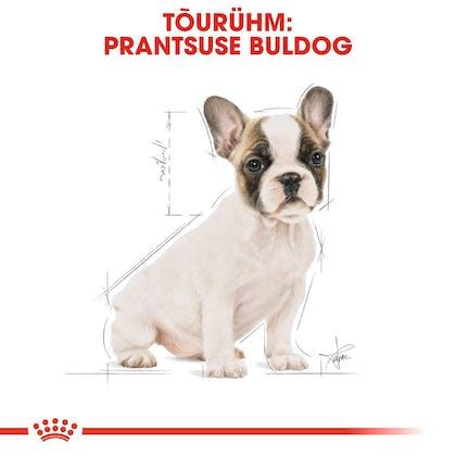 RC-BHN-PuppyFrenchBulldog-CM-EretailKit-4-et_EE