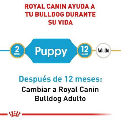RC-BHN-PuppyBulldog-CM-EretailKit-1