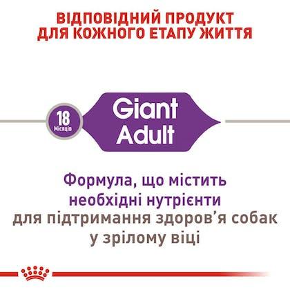 RC-SHN-AdultGiant_2-UA.jpg