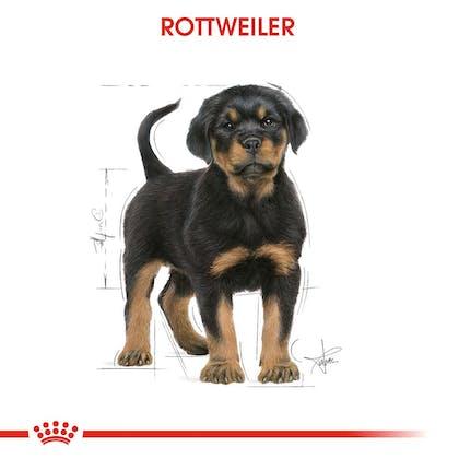 Royal Canin Yavru Köpek Rottweiler Puppy1