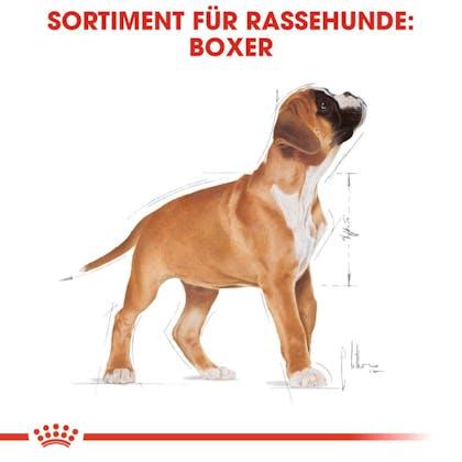 RC-BHN-PuppyBoxer-Trockennahrung_Sortiment_DE