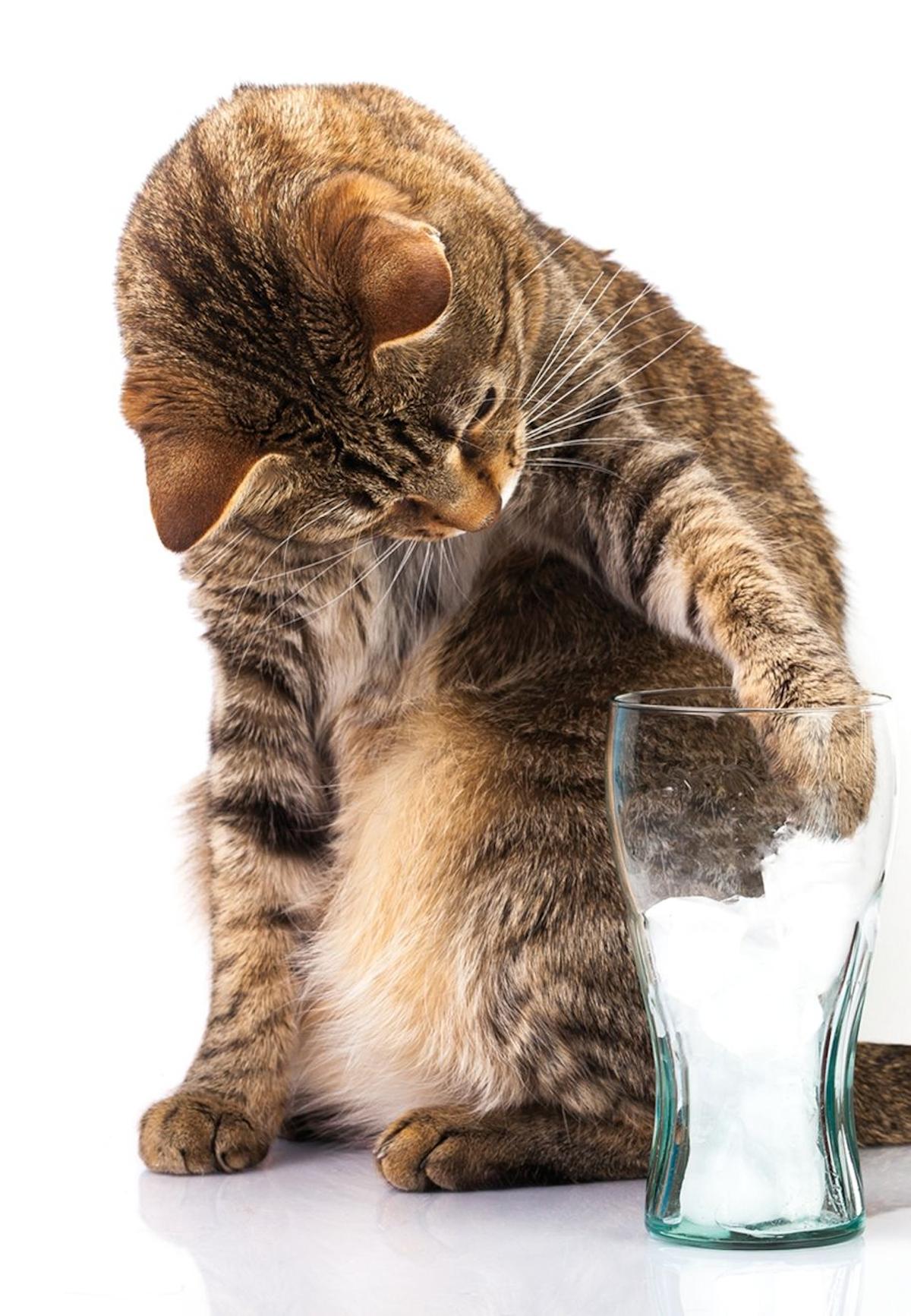 Los gatos se pueden entretener jugando con el agua ofrecida de una forma diferente como, por ejemplo, en cubitos de hielo, lo que además favorece la ingesta de agua.