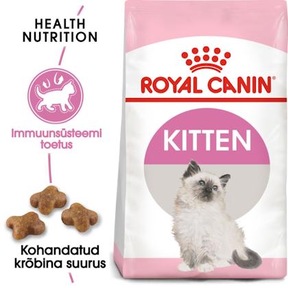 RC-FHN-Kitten-FHN KITTEN_000_ESTONIA-ESTONIAN