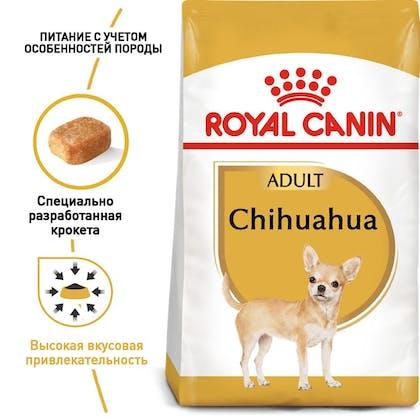 RC-BHN-Chihuahua_1-RU.jpg