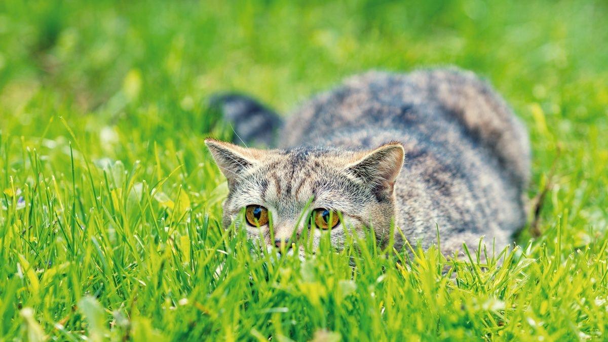 Comportamento alimentare nel gatto