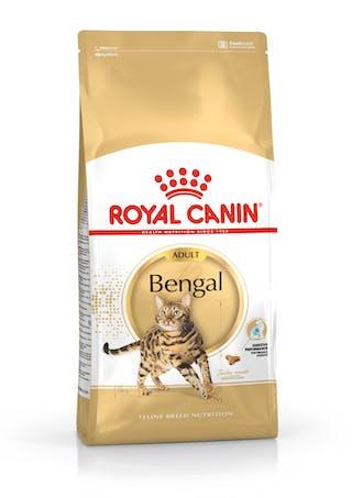 Bengal Adult
