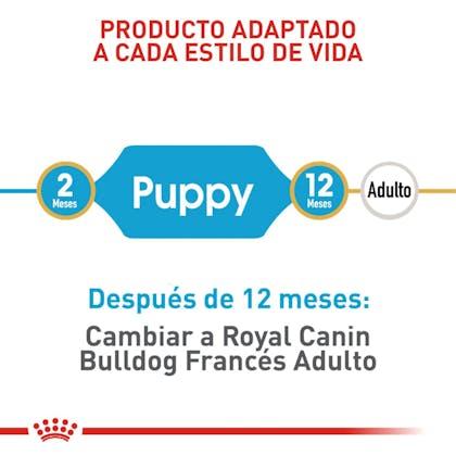 RC-BHN-PuppyBulldog-CM-EretailKit-3