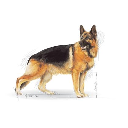 BHN 2013 - Part 2 - Emblematic pets pictures - GER-AD-BHN-ILLUSTR