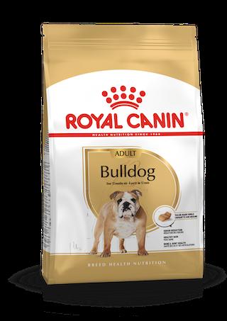 Bulldog Inglés Adulto