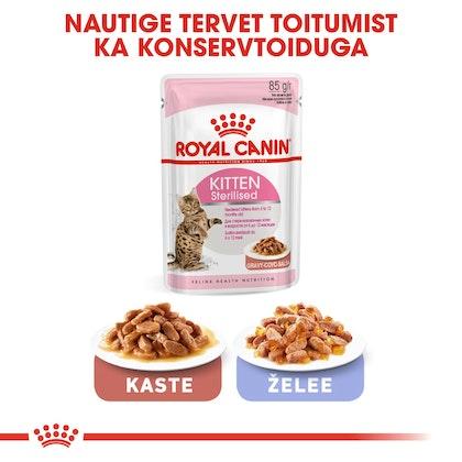 RC-FHN-KittenSterilised-CV6_001_ESTONIA-ESTONIAN