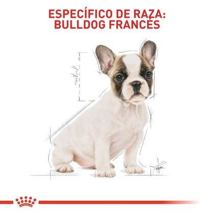 RC-BHN-PuppyBulldog-CM-EretailKit-5