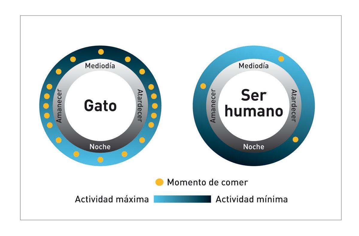 Tal y como se muestra en estos diagramas, los patrones de actividad y de alimentación del gato difieren significativamente de los del ser humano.