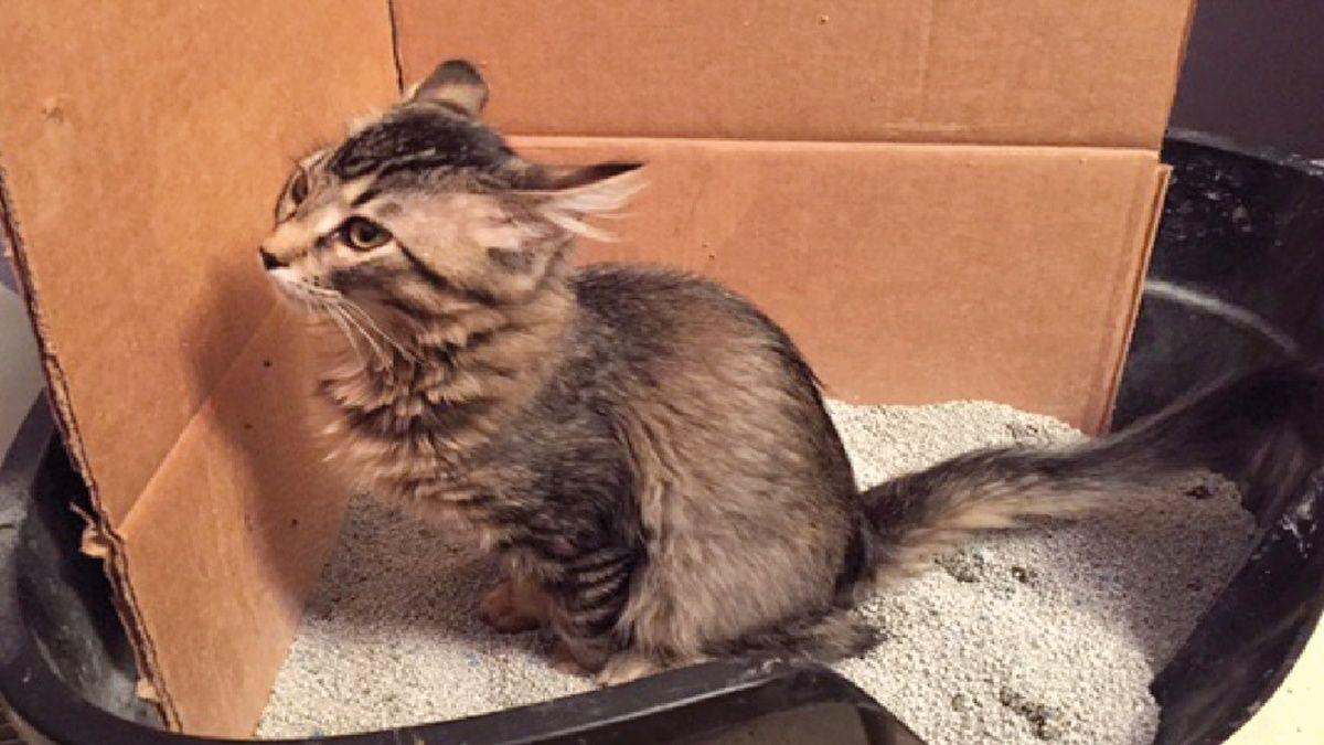Persönliche Empfehlungen… Die Katze mit chronischer Diarrhoe