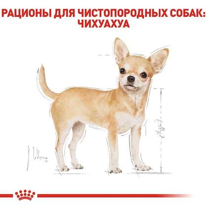 RC-BHN-Chihuahua_2-RU.jpg