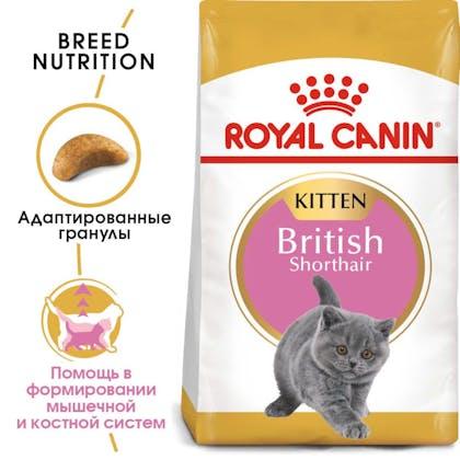 RC-FBN-KittenBritishShorthair-MV-EretailKit_rus