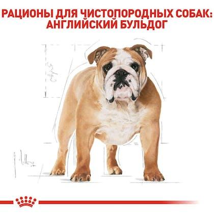 RC-BHN-Bulldog_2-RU.jpg