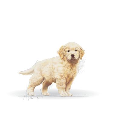 BHN 2013 - Part 2 - Emblematic pets pictures - GOLD-JU-BHN-ILLUSTR