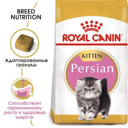 RC-FBN-KittenPersian-MV-EretailKit_rus