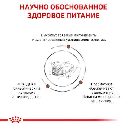 RC-VET-DRY-CatGastro-Eretailkit-B1_04-RU