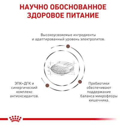 RC-VET-DRY-DogGastroHEP-Eretailkit-B1_4-RU