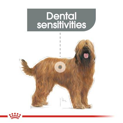 CCN-DentalMaxi-CV-Eretailkit-1