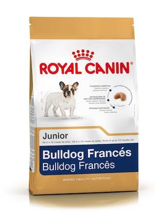 Bulldog Francés Junior