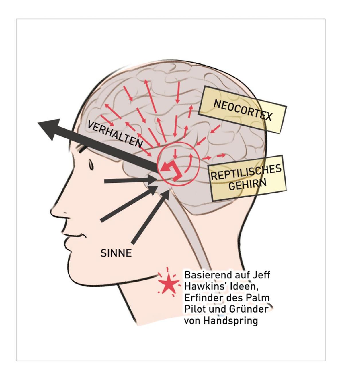 Das Reptiliengehirn übersetzt Empfindungen direkt in Verhalten. Wir können unseren Neocortex jedoch trainieren, die Situation zu kontrollieren.