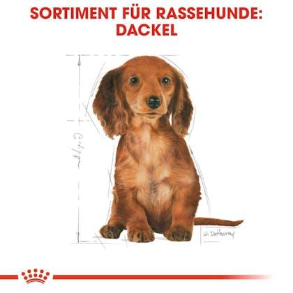 RC-BHN-Puppy-Dachshund-Trockennahrung_Sortiment_DE