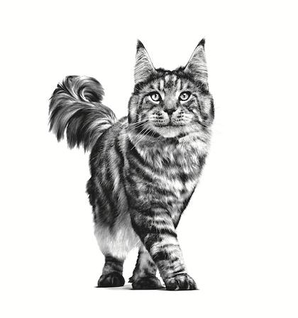 VHN-PACKAGING EMBLEMATIC-ADULT CAT-VHN TRANSVERSAL PACKAGING CHARTER