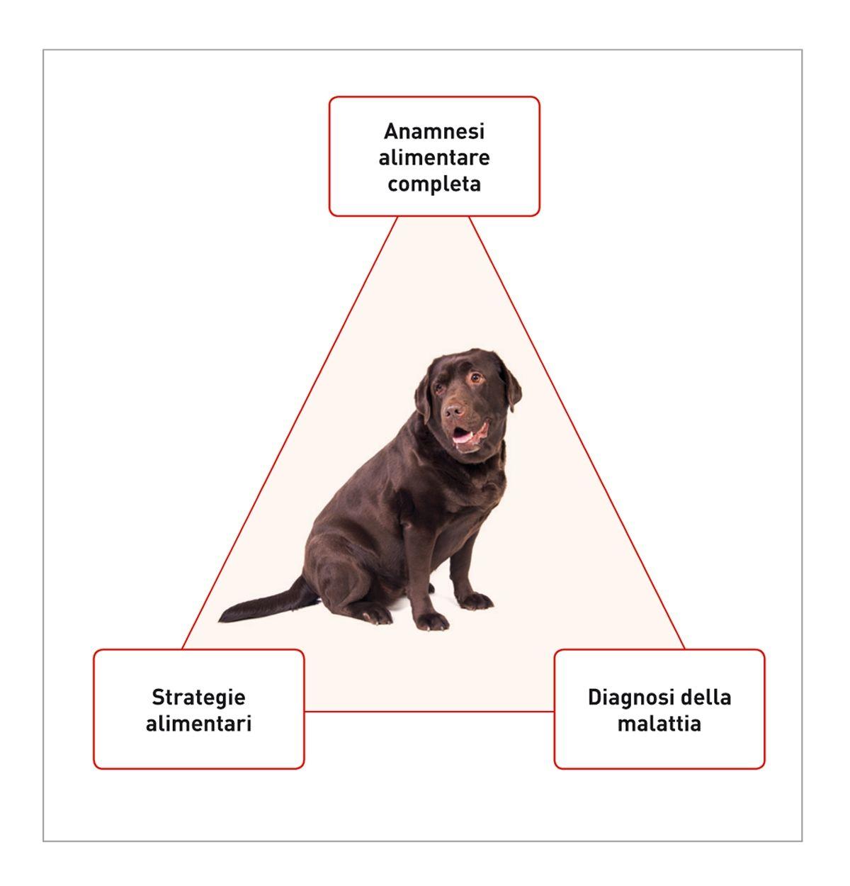 Il successo della gestione dietetica dipende dalla relazione che intercorre fra tre fattori principali. È indispensabile che il veterinario valuti: (I) l'anamnesi alimentare del paziente, (II) le strategie alimentari disponibili per il paziente e (III) la malattia da trattare. Un approccio dietetico specifico può essere generalmente ottenuto se questi tre aspetti sono valutati caso per caso.