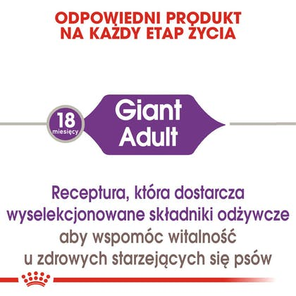 RC-SHN-AdultGiant-CV-EretailKit-1-pl_PL
