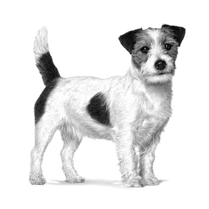 VHN-PACKAGING EMBLEMATIC- ADULT SMALL DOG-VHN TRANSVERSAL PACKAGING CHARTER