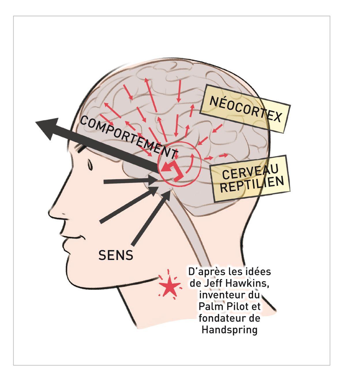 Le cerveau reptilien traduit directement les sensations en comportements mais nous pouvons apprendre à notre néocortex à garder le contrôle de la situation.