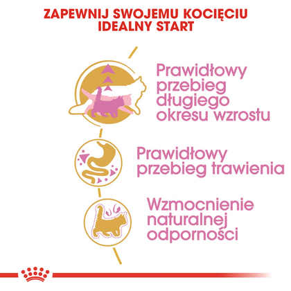 RC-FBN-KittenMaineCoon-CV2-cat_002_POLAND-POLISH