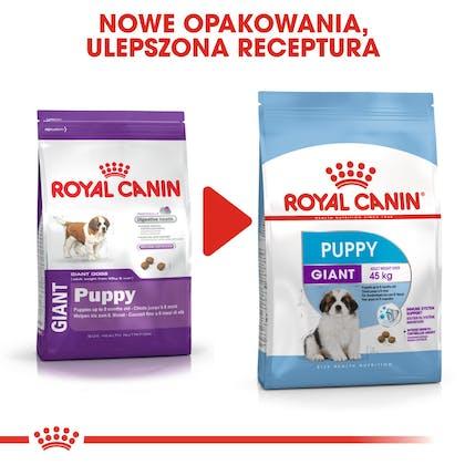 RC-SHN-Puppy-Giant-CV8_012_POLAND-POLISH