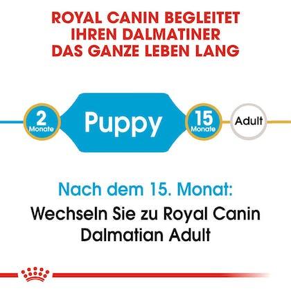 RC-BHN-Puppy-Dalmatian-Trockennahrung_2-Monate_DE