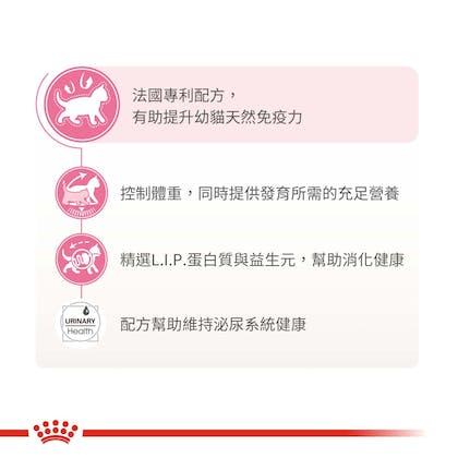 絕育幼貓KS34_產品賣點