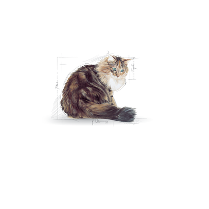 FHN POS 2012 - Emblematic Cats Illustrations - AGEING-FHN-ILLUSTR